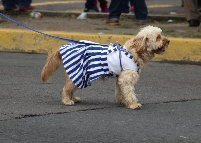 Hasta las mascotas demostraron su fervor cívico | Ernesto Martínez